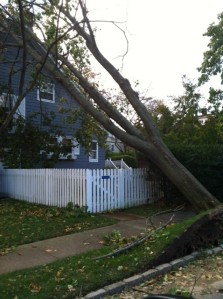 Hurricane Sandy Takes Down A Tree