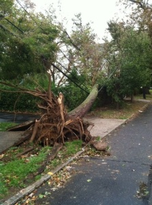 Hurricane Sandy Uses Tree To Knock Down Electricity, Phone, Internet and Cable TV