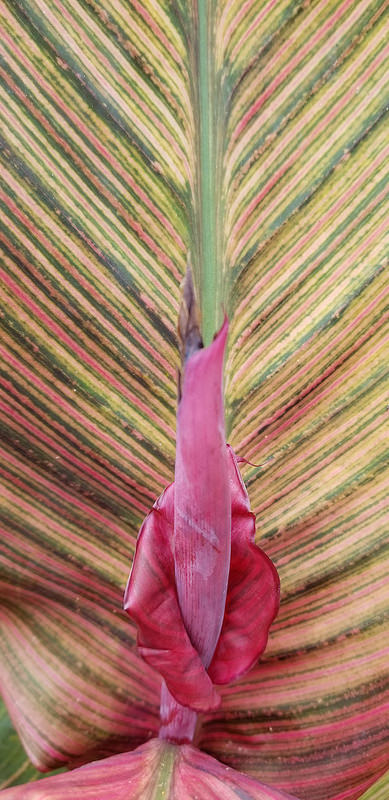 Flower Peacock