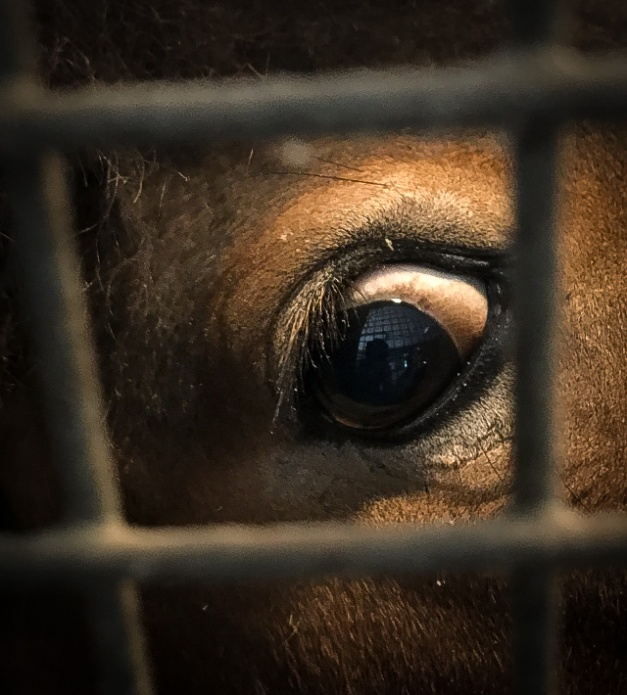 3C_Xiomaro_Horse_Eye