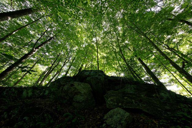 3_Weir_Landscape.jpg